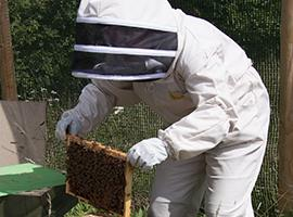 Photo of Beekeeper checking hives. Photo - Heather Lowther