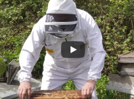 Screen shot from honey monitoring scheme protocol video
